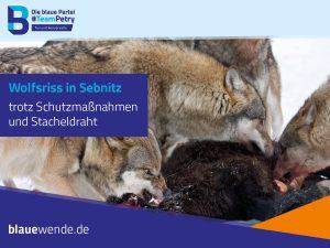 Wolfsschaeden